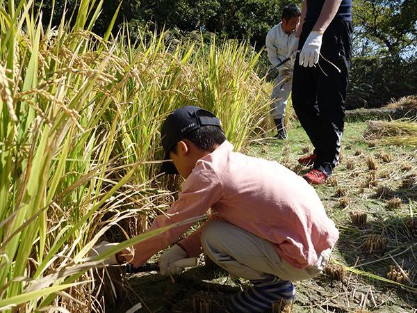 稲刈り2015_004