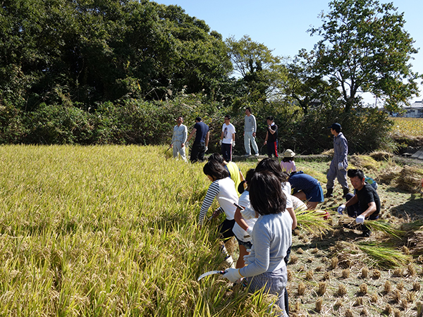 稲刈り2015_003