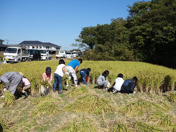 稲刈り2015_002