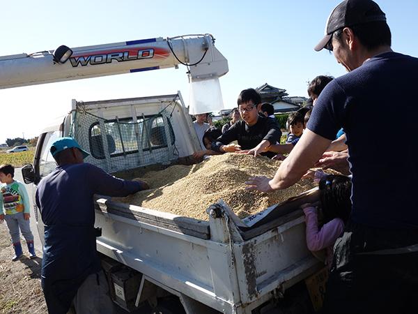 稲刈り2015_005